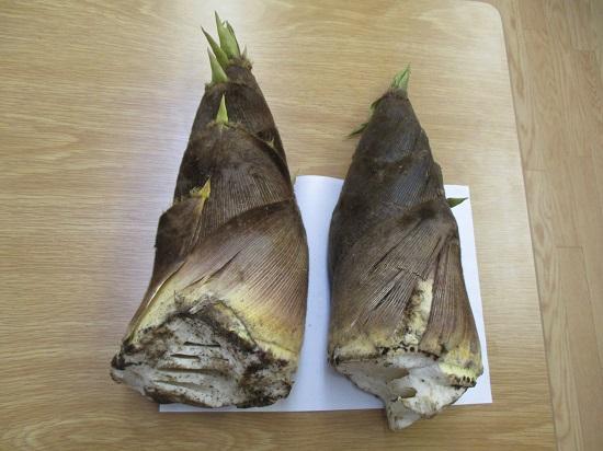 土つき竹の子写真