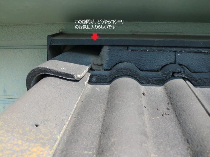 岡山市東区O様邸のコウモリが巣くっている隙間