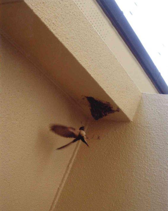 岡山市東区のS様邸の施工後に新たに作りだしたツバメの巣
