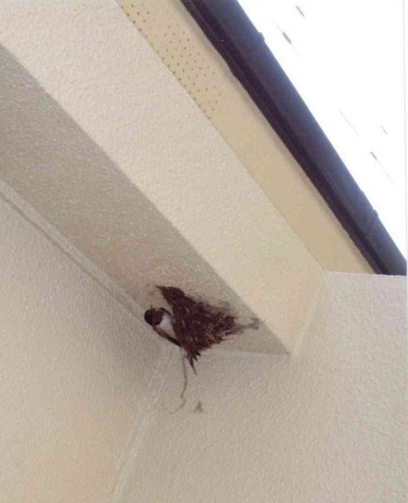 岡山市東区のS様邸の施工前のツバメの巣